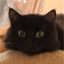 Иконка Майнкрафт сервера MineLegacy